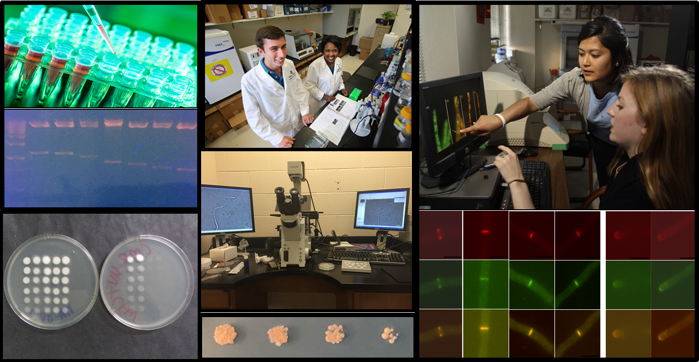 a compilation of lab images featuring students and Prof. Jackson-Hayes