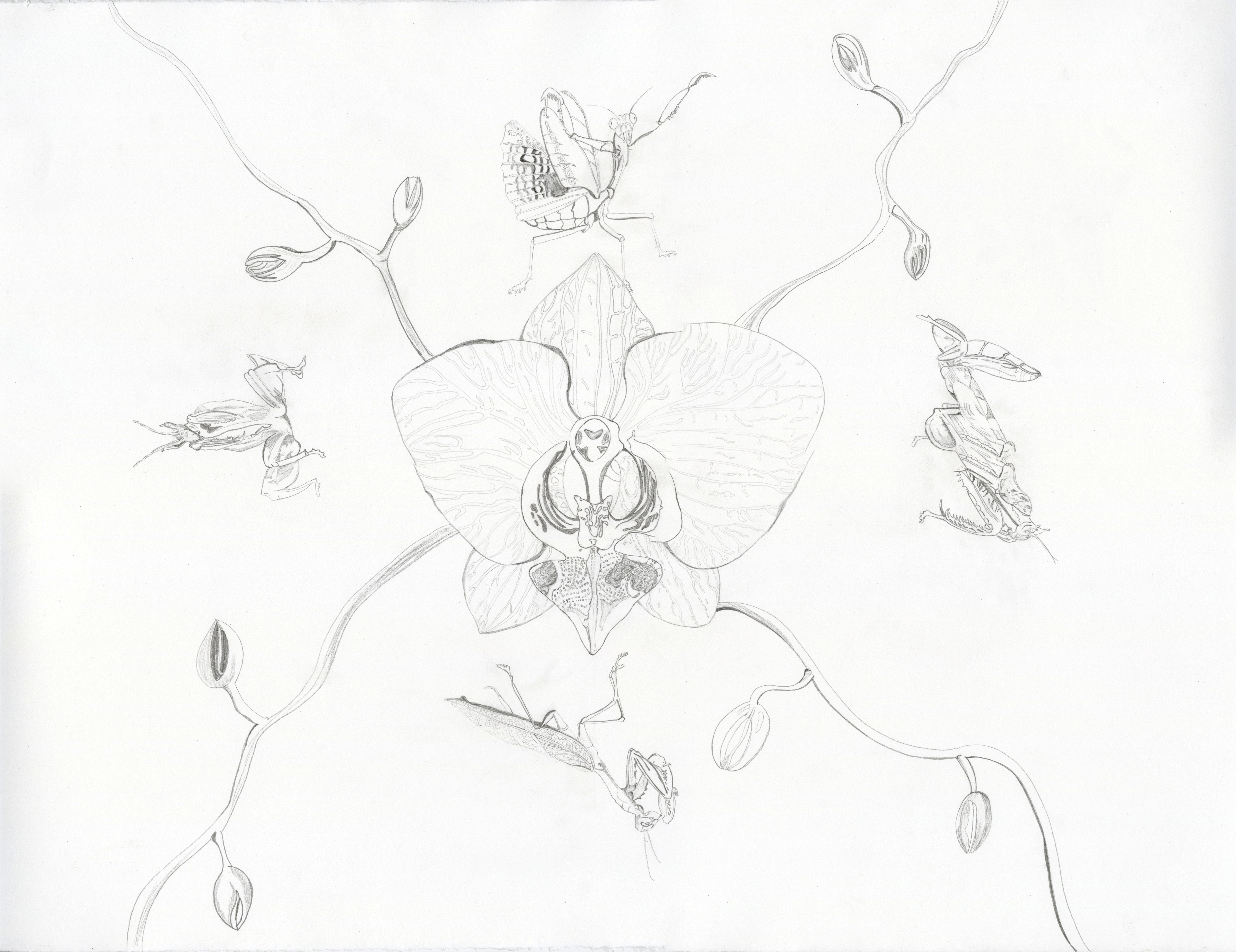 A drawing of insects and a flower