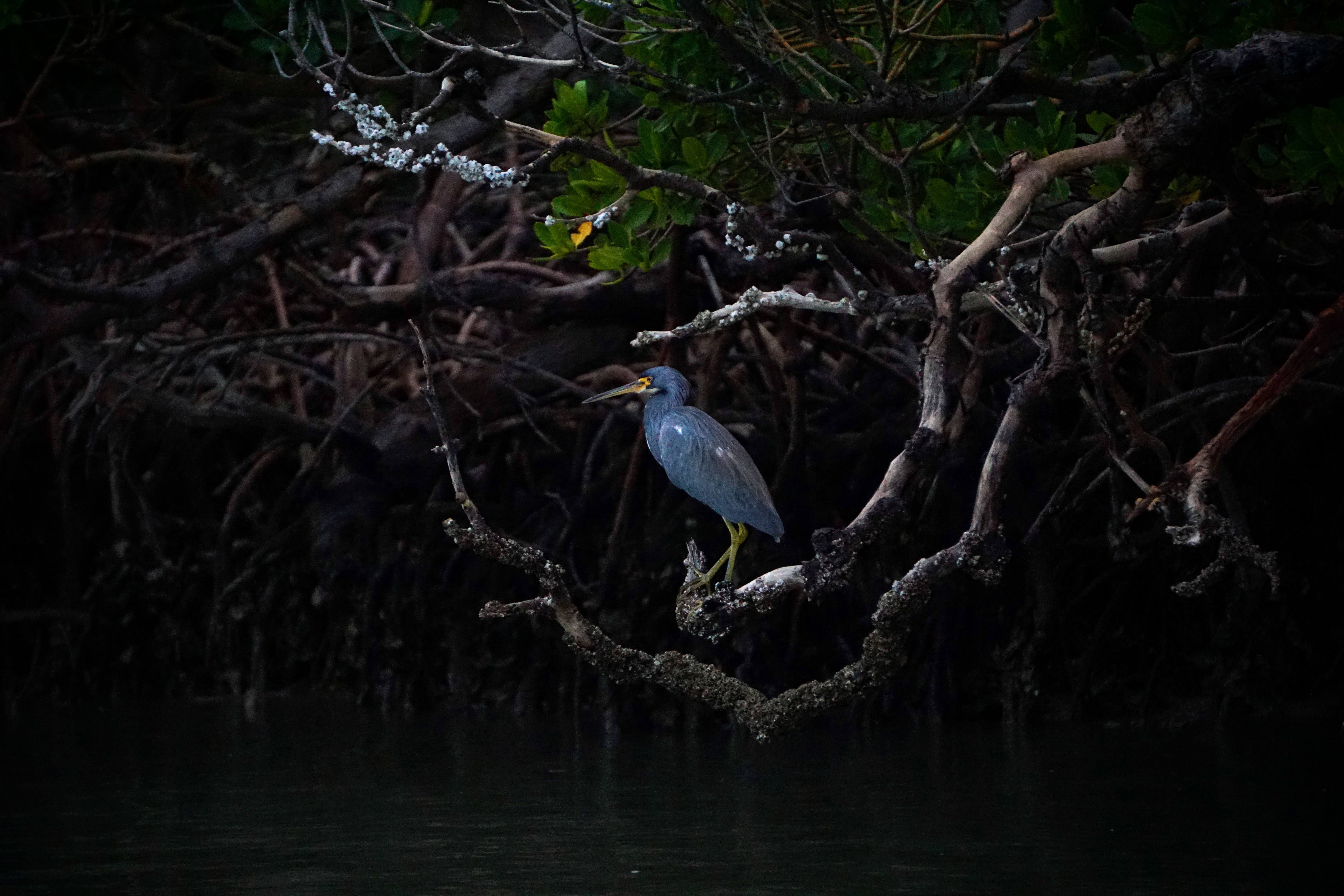 a blue heron on a branch in a swamp